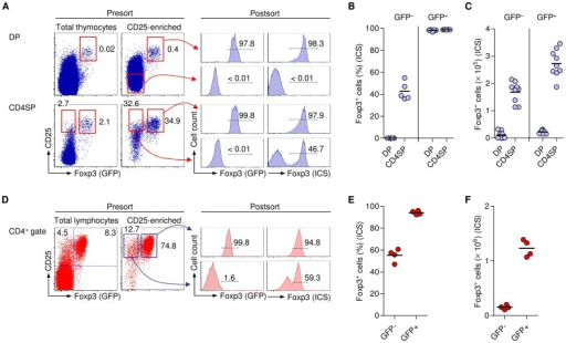 Infidelity of BAC-Foxp3Cre-GFP-dependent GFP expression.(A-C) Tracking Foxp3+ cells that lack GFP expression during thymic Treg cell lineage commitment. (A) Representative dot plots depict presort analysis of CD25 and GFP expression among gated DP and CD4SP thymocyte subsets from six-week-old BAC-Foxp3Cre-GFP mice before and after magnetic bead enrichment of CD25+ cells, as indicated. Histograms show postsort analysis of GFP expression (left) and Foxp3 expression (right), as revealed by Foxp3 ICS, among indicated postsort populations. (B) Percentages and (C) numbers of Foxp3+ cells (ICS) among GFP− and GFP+ cells that had been sorted from DP and CD4SP thymocyte compartments. (D-F) Tracking Foxp3+ Treg cells that lack GFP expression in peripheral lymphoid tissues. (D) Representative dot plots depict presort analysis of CD25 and GFP expression among gated CD4+ T cells from LNs before and after magnetic bead enrichment of CD25+ cells. Histograms show postsort analysis of GFP expression (left) and Foxp3 expression, as revealed by Foxp3 ICS (right), among indicated postsort populations. (E) Percentages and (F) numbers of Foxp3-expressing (ICS) CD4+CD25+ T cells among GFP− and GFP+ cells that had been isolated by flow cytometry from pooled scLNs of BAC-Foxp3Cre-GFP mice. All mice were six weeks old. Lines with arrowheads in dot plots illustrate the gating scheme. Numbers in dot plots and histograms indicate percentages of cells in the respective quadrant or gate. Dots and horizontal lines in graphs indicate individual mice and mean values, respectively.