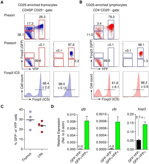 Genetic lineage tracing of Foxp3+ Treg cells in BAC-Foxp3Cre-GFP × R26Y mice.Analysis of Foxp3 expression by Foxp3 ICS, in FACS purified GFP−YFP− and GFP−/GFP+YFP+ populations among (A) CD25+ CD4SP thymocytes and (B) CD4+CD25+ T cells from LNs of BAC-Foxp3Cre-GFP × R26Y mice. Representative presort analysis of GFP and YFP expression among gated CD4+CD25+ cells and postsort analysis are shown as dot plots. Histograms depict Foxp3 expression (ICS) in sorted GFP−YFP− (left) and GFP−/GFP+YFP+ (right) cells. Numbers in dot plots and histograms indicate percentages of cells in the respective quadrant or gate. Data are representative of three independent experiments including at least three mice. (C) Percentages of GFP+ cells among ex vivo populations of YFP−CD25+ CD4SP thymocytes (left) and peripheral YFP−CD4+CD25+ T cells (right). (D) mRNA expression of GFP, YFP and Foxp3 was determined by real-time RT-PCR in sorted GFP−YFP− and GFP−/GFP+YFP+ cells presented in (A and B).