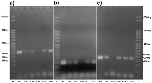 Specific PCR amplification of DNA isolated from flow-sorted FISHIS labeled pasta wheat chromosomes 1A, 6A and 3B.In all Panels: lane M: 50 bp-step ladder; lane WG: whole pasta wheat genomic DNA; lane F-AG: FISHIS labeled flow-sorted whole A-genome chromosomes; lane F-BG: FISHIS labeled flow-sorted whole B-genome chromosomes; lane NF-ALL: whole flow-sorted chromosome complement without FISHIS labeling; lane F-ALL: sorting of the whole FISHIS labeled pasta wheat chromosome complement. Panel a): chromosome 1A amplicons analysis with specific primers from the Xgwm136-1A SSR molecular marker. In lane F-1A, the DNA obtained from 300 FISHIS labeled flow-sorted 1A chromosomes has been PCR amplified showing a band which is only visible where 1A chromosome DNA is present. Panel b): chromosome 6A PCR amplification with primers from the Xgwm169-6A SSR molecular marker. In lane F-6A a specific 6A chromosome band is shown which is absent in all B-genome amplifications. Panel c): chromosome 3B PCR amplification with primers from the Xgwm285-3B SSR molecular marker. In lane F-3B, 300 FISHIS labeled 3B chromosomes have been amplified with a specific probe showing a band present in all lanes where 3B chromosome DNA is present.