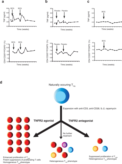 TNF induction of Tregs in humans and summary finding of TNFR2 agonist and antagonist activity.(a) In a small double-blinded, placebo-controlled trial of human subjects, BCG treatment induces TNF and shortly thereafter a surge of Tregs appears in the treated subject. (b) In contrast, in the same double-blinded trial, placebo treatment induces neither TNF nor Tregs in the circulation. (c). BCG treatment of a human subject taking chronic Enbrel (etanercept), an anti-TNF antibody, reveals neither TNF nor Treg induction. This finding supports endogenous TNF as being necessary for Treg expansion in humans. (d) After expansion, the TNFR2 agonist is better than TNFR2 antagonist at proliferating and yielding more phenotypically homogeneous Tregs (CD4+ CD25hi FOXP3+ CTLA4+ TNFR2+ CD45RO+ CD62L+ CD127−, HLA-DRhi CCR5− CCR7− CXCR3− ICOS−), with higher suppression capacity for CD8+ cells, and lower cytokine-producing capability. The TNF2 antagonist was able to suppress Treg expansion.
