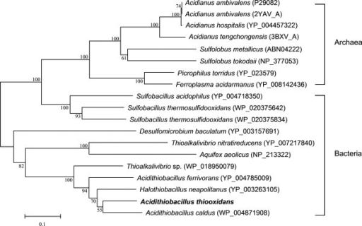 Phylogenetic dendrogram based on the SORs from A. thiooxidans and its close homologs from other species. It was constructed using the neighbor-joining algorithm implemented in the MEGA version 5.05, and its reliability was evaluated by 1,000 bootstrap replicates.