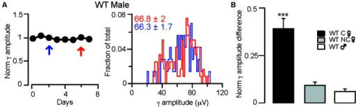 Fluctuations in γ oscillation amplitudes recorded during REM sleep are absent in males and non-cycling WT females. (A)Left: diagram showing normalized γ amplitudes during REM sleep on consecutive days in a WT male mouse. Right: distribution of γ amplitudes (binned at 2 μV) in all REM phases recorded on two separate measurements taken 3 days apart. The 2 days are indicated on the left with red and blue arrows. Colored numbers indicate mean ± SEM of the corresponding γ amplitude histograms. (B) Summary data showing the absolute values of the differences between the normalized γ amplitudes during REM sleep in different groups of mice. In the cycling WT females the difference was calculated between days of diestrus and estrus. In WT males and non-cycling females the differences in γ amplitudes were determined at 3-day intervals that approximated the time difference between the estrus and diestrus of cycling female mice. Asterisks indicate significant difference from all other groups in a Tukey's multiple comparison test following a one-way ANOVA.