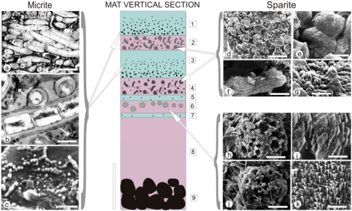A schematic presentation of the artificial mat zonation (in vertical section), with examples of most characteristic calcium carbonate morphs precipitated in micritic (left column) and sparitic (right column) layers (modified after [50]). For detailed explanation see text. Scale bars: (a) 5 μm, (b) 1 μm, (c) 1 μm, (d) 100 μm, (e) 10 μm, (f) 10 μm, (g) 10 μm, (h) 10 μm ,(i) 3 μm, (j) 20 μm, (k) 2 μm.