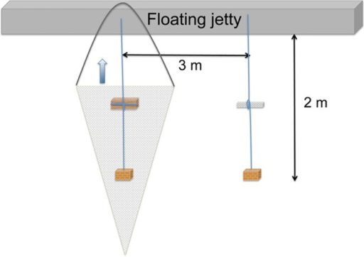 Field experiment.Experimental set up used to study detection of waterborne chemical cues by shipworm larvae in the field. Net bags with and without wooden panels were submerged at 1 m depth from a floating jetty. A vertical tow with a hoop-net (90 μm, illustrated by a grey triangle) was used to filter the water around the net bags. In each tow, the hoop-net including the net bag and its line was lifted to the surface.