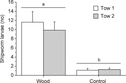 Field experiment.Number of shipworm larvae collected around wooden panels wrapped in plankton net (Wood) or plankton net only (Controls) at two occasions (Tow 1 and 2). Letters above bars indicate significant differences between mean values based on the Student-Newman-Keuls multiple comparisons test (SNK, P < 0.05). Error bars show + SEM (n = 8).