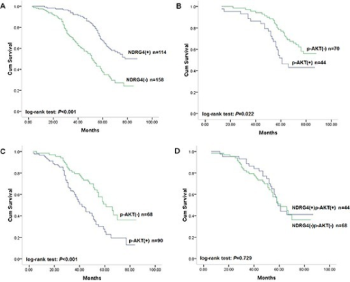 Kaplan-Meier survival curves of patients in the retrospective study cohort(A) Correlation of NDRG4 staining with overall survival. (B) Correlation of p-AKT staining with overall survival among patients with tumors with positive NDRG4 staining. (C) Correlation of p-AKT staining with overall survival among patients with tumors with negative NDRG4 staining. (D) Survival curves for patients with aberrant NDRG4 and p-AKT coexpression.