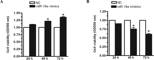 Cell viability of the MGC-803 human gastric carcinoma cell line is increased by miR-19a. The MGC-803 cells were transfected with (A) miR-19a mimics or (B) miR-19a inhibitors and negative controls for 24, 48 or 72 h, respectively. The relative expression level of miR-19a was determined using reverse transcription-quantitative polymerase chain reaction and RNU48 was used an internal control. Cell viability was determined using an MTT assay. Data are presented as the mean ± standard error of three independent experiments. *P<0.05, vs. control. miR, microRNA; OD, optical density; NC, negative control.