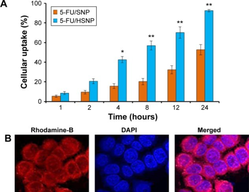 Cellular uptake of targeted and non-targeted nanoparticles.Notes: (A) Intracellular uptake of 5-FU/SNP and 5-FU/HSNP in colo-205 colon cancer cells. Rhodamine-B was used as a fluorescent dye. The uptake is shown as a percentage of total amounts of NP (dye) incubated with the cancer cells. (B) Representative confocal microscopy images of 5-FU/HSNP in colo-205 cancer cells. The cells are stained with Lysotracker lysosomal stain, and DAPI was used to stain the nucleus. *P<0.05, **P<0.01.Abbreviations: 5-FU, 5-fluorouracil; HSNP, hyaluronic acid-conjugated silica nanoparticles; SNP, silica nanoparticles; NP, nanoparticle.
