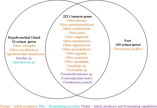 Venn Diagram Showing Shared And Non Shared Bacterial Sp Open I