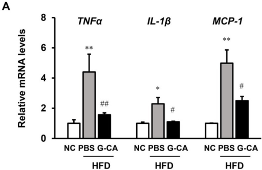 Effect of G-CA on metabolic gene expression in liver. Six weeks after beginning a high fat diet, C57BL6 mice were orally administered G-CA (300 mg/kg body weight) or PBS daily for 10 weeks (n = 5–6). (A) Tumor necrosis factor alpha (TNFα), interleukin-1 beta (IL-1β), and monocyte chemoattractant protein 1 (MCP-1) mRNA levels were analyzed by RT-qPCR and normalized to 18S rRNA expression; (B) Sterol regulatory element-binding protein 1c (SREBP-1c), fatty acid synthase (FAS), and acetyl-CoA carboxylase (ACC) mRNA levels were analyzed by RT-qPCR and normalized to 18S rRNA expression; (C) Hepatic cholesterol 7 alpha-hydroxylase 1 (CYP7A1), farnesoid X receptor (FXR), small heterodimer partner (SHP), hepatocyte nuclear factor 4 alpha (HNF4α), and liver X nuclear receptor alpha (LXRα) mRNA levels were analyzed by RT-qPCR and normalized to 18S rRNA expression. Values are expressed as fold change compared with the NC group. NC: untreated, normal chow diet; PBS-HFD: PBS-treated, high fat diet (HFD); G-CA-HFD: G-CA-treated, HFD. Values are mean ± SE. * p < 0.05, ** p < 0.01 vs. NC group; #p < 0.05, ##p < 0.01 vs. PBS-HFD group.