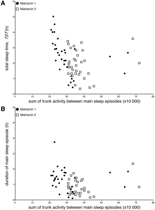Sleep times and trunk activity.                        Scatterplots showing the lack of a relationship between total trunk                            activity between main sleep episodes and total sleep time                                (TST, hours, h) (A) or                            duration of the main sleep episode (hours, h)                                (B) for both Matriarch 1 (closed circles)                            and Matriarch 2 (open squares). While there is a trend for                            shorter sleep times with increased trunk activity, these trends are not                            statistically significant even when the days without sleep are removed                            from the analysis. These plots demonstrate that prior activity does not                            appear to affect sleep times.