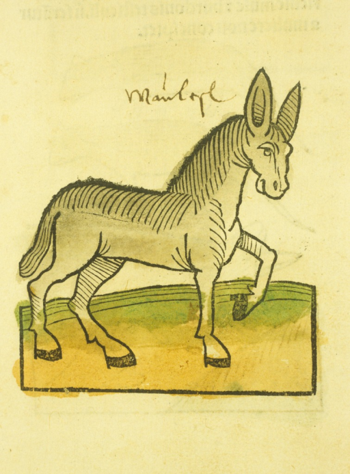 <p>Hand-colored woodcut of the animal.</p>