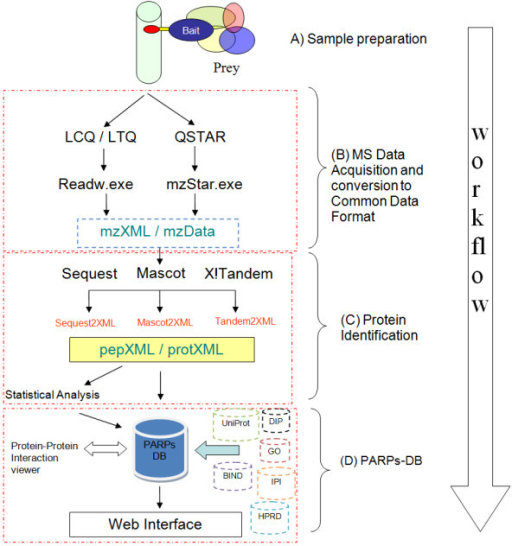 Schematic overview of the approach for PARPs protein interaction research. The steps are (A) PARPs co-immunoprecipitation and with interactors; (B) generation of mass spectral data; (C) peptide sequence assignments using different search engines and protein identifications using different methods of inference; (D) the annotations and results are loaded automatically into PARPs database for viewing, annotation and analyses.