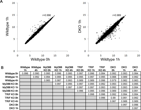 Genome-wide invariance between wildtype, single and double KOs.Highly correlated gene expressions between genotypes, and between time points. A) Left panel: wildtype 0 h (x-axis) vs. wildtype 1 h (y-axis), right panel: wildtype 1 h (x-axis) vs. DKO 1 h (y-axis). Other combinations of genotype and time points also show similar correlations (data not shown). Each point in the plot represents the expression of a single ORF. B) Whole genome Pearson correlations between samples.