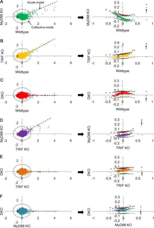 Large scatter in collective mode and linear distribution in acute-stochastic mode.Genome-wide single ORFs (left panels) expression changes (Δx) for 0–1 h between genotypes: wildtype vs. A) MyD88 KO, B) TRIF KO, C) DKO; TRIF KO vs. D) MyD88 KO and E) DKO; F) MyD88 KO vs. DKO. Right panels: corresponding plots for group of 200 ORFs, sorted by their expression change in the corresponding genotype (x-axis). + and − indicate average of expression change of the upregulated and downregulated ORFs in each group, respectively. Arrows indicate groups containing the acute-stochastic mode.