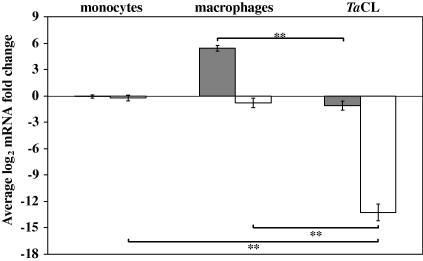 The expression of musculoaponeurotic fibrosarcoma oncogene (MAF) transcription factors MAFB and c-MAF is suppressed in Theileria annulata-infected cell-lines. Average log2 c-MAF (grey bars) and MAFB (white bars) mRNA fold difference in bovine monocytes, bovine monocyte-derived macrophages (mϕ) and T. annulata-infected cell-lines compared with a standard resting monocyte sample. The error bars indicate the standard error for eight biological replicates for monocytes and bovine monocyte-derived mϕ and 10 ex vivo derived T. annulata-infected cell-lines. The statistical significance of the difference in mRNA levels between the T. annulata-infected cells and uninfected monocytes or bovine monocyte-derived mϕ is indicated and ** denotes P ⩽ 0.001.