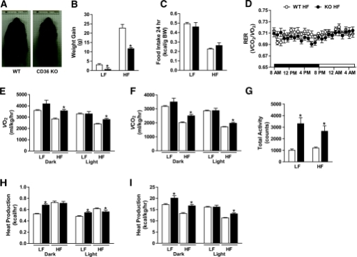 Protection of diet-induced obesity in middle-aged CD36