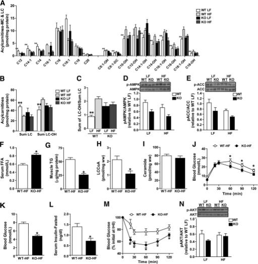 Altered skeletal muscle lipid handling prevents develop