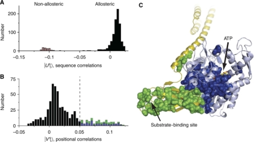 Identification of an allosteric sector in Hsp70 proteins. (A) A histogram of the Hsp70/110 sequences projected on a top axis of sequence variation derived from singular value decomposition and independent component analysis (see Box 1 Materials and methods). This axis separates family into two sub-families that correspond to the allosteric Hsp70s and the non-allosteric Hsp110s. (B) A histogram of Hsp70 residues projected on the corresponding axis of positional co-evolution, showing that a small fraction of residues is largely responsible for the sequence divergence shown in panel A (115 sector out of 605 total residues or ∼20%). This defines the Hsp70 sector. The sector nearly equally comprises residues from the nucleotide-binding domain (blue, 56 residues) and the substrate-binding domain (green, 59 residues). (C) The Hsp70 sector mapped onto a model of the ATP-bound state of E. coli DnaK. The sector forms a physically contiguous group of residues that connect the ATP-binding site in the nucleotide-binding domain (pale blue) to the substrate-binding pocket of the substrate-binding domain (yellow) through the binding interface between the two domains. Sector positions are represented as spheres and colored as in panel B. Source data is available for this figure at www.nature.com/msb.