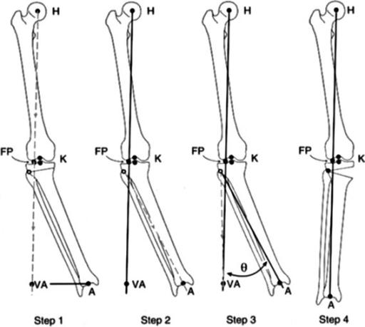 Principles of deformity correction dror paley