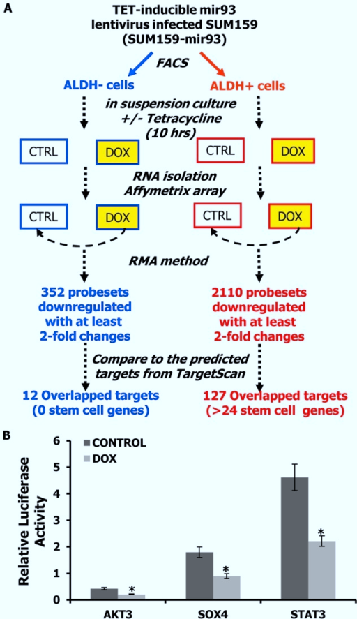 mir-93 targets stem cell regulatory genes.A. Schematic representation of the experimental design to identify the direct targets of mir-93 in SUM159 cells. B. Activity of the luciferase gene linked to the 3′UTR of AKT3, SOX4, or STAT3. The pMIR-REPORT firefly luciferase reporter plasmids with the wild-type 3′UTR sequences of AKT3, SOX4, or STAT3 were transiently transfected into pTRIPZ-mir-93-SUM159 cells and an internal control ACTB luciferase reporter was co-transfected for normalization. The cells were treated with or without DOX. Luciferase activities were measured after 48 hr. The relative luciferase activity was calculated as the ratio of (the results from the cells transfected by individual reporter)/(the results from the cells transfected by the internal control in the same cell group). The data are mean and standard deviation (SD) of separate transfections (n = 4). *p<0.05; Error bars represent mean ± STDEV.