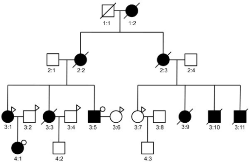 Pedigree Of Marfan Syndrome Family Circles Represent F Open I