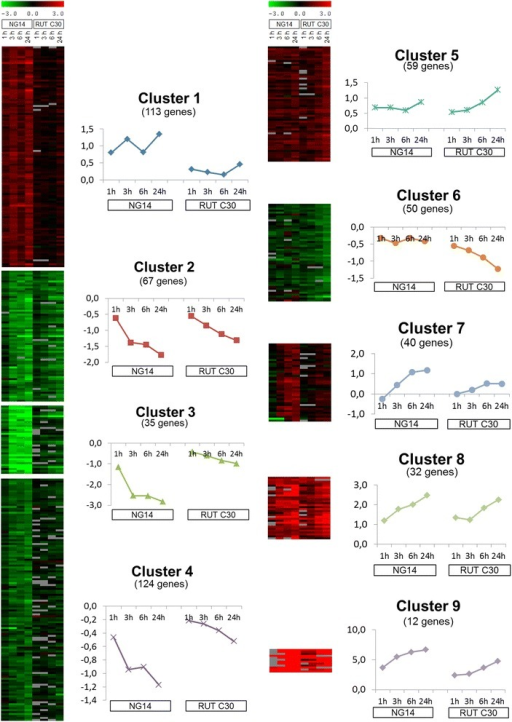 Clustering of differentially expressed genes during induction by lactose in both studied strains. From 568 genes identified as significantly regulated among the several expression experiments performed, 532 were gathered in 9 clusters according to their changes during the NG 14 and RUT C30 lactose induction. The average profile of each cluster is shown next to its heat map.