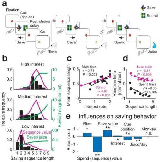 Reward-saving behavior in monkeys. (a) Sequential saving task. Animals chose freely to save or spend reward and determined internally the length of each saving sequence. Consecutive save choices increased reward amounts (determined by interest rate); spend choice resulted in reward delivery. Sequences lasted up to 9 consecutive trials (~12 s cycle time/trial). (b) Saving behavior, reward increases, and subjective value functions for different interest rates. Bars: relative frequencies with which animals produced different sequences, combined across animals. Green curves: reward amounts for different sequences. Magenta: subjective values (normalized), combining choice frequencies with reward magnitudes. With highest interest rate, reward stagnated after seven trials; most neuronal recordings involved intermediate interest rates. (c) Monkeys adapted their saving behavior to interest rate. Linear regression of weighted mean sequence length on interest for main task (black, n = 17) and control test with uncued changes in interest (magenta, n = 9). Data combined across animals. (d) Linear regression of reaction time on final sequence length. Reaction times (equally populated bins pooled over animals and interest rates, z-normalized within sessions) on spend trials (black, averaged over n = 3,033 trials) and save trials (magenta, averaged over n = 8,500 trials) were shorter for longer sequences (i.e. higher rewards). (e) Logistic regression of trial-by-trial choices. Spend/save value: subjective value associated with spending/saving on current trial; sequence value: subjective sequence value (spend value on final trial). Bias: constant; Cue position: left/right save cue position; Juice/day: consumed juice; Monkey: animal identity. **P < 0.005, *P < 0.05; n.s. not significant. Error bars: s.e.m.