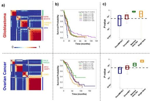 Tumor stratification using predicted driver gene profiles. (a) Heatmaps depicting consistency of clustering (fraction of bootstrap replicates in which patients clustered together) for predicted driver gene mutational profiles (binary 0–1 vectors) using NMF. (b) Survival profiles of glioblastoma and ovarian cancer patients stratified by consensus clustering in (a). (c) Box plots showing the distribution of P-values (log rank test) for survival profiles of random subsets of glioblastoma (sample size 275) and ovarian cancer (sample size 250) patients, clustered into the same number of groups using different gene signatures (OncoIMPACT predicted driver genes; DriverNET predicted driver genes; Randomly selected sets of genes of the same size as OncoIMPACT predicted drivers; Randomly selected single genes).