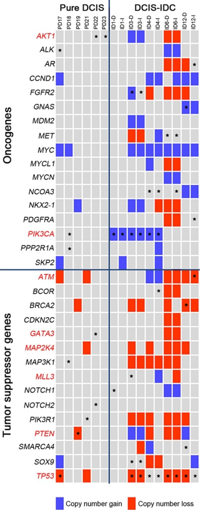 Classification of the somatic mutations and CNAs with respect to the cancer-related functions in the pure DCIS and synchronous DCIS-IDCThe COSMIC breast top 20 genes are marked in red letters. Block colors represent the copy number alterations (blue: gain, red: loss). Asterisks represent the somatic mutations.