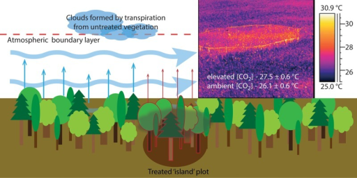 A simple representation of the 'island effect'. The small plot of treated vegetation with, for example, lowered transpiration is surrounded by untreated vegetation with unaltered and relatively higher transpiration. Clouds formed by the untreated plots influence the treated vegetation via altered VPD and lowered solar radiation. The darkened soil below the treated plot illustrates the weak coupling of neighbouring plots relative to the strong coupling of atmospheric conditions. The insert on the top right clearly shows a change in surface energy balance due to lowered stomatal conductance in response to elevated CO2 (from Leakey 2009 reproduced with permission from The Royal Society).