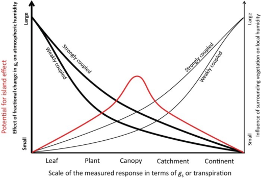 The potential for the island effect is maximal at intermediate spatial scales. This is because the two effects shown (effect of gs on atmospheric humidity, influence of surrounding vegetation on local humidity) are compensatory in terms of promoting the island effect. Generally, atmospherically well-coupled plants/stands such as tree canopies are more prone to the island effect than less coupled ones (e.g. grassland, see McNaughton and Jarvis 1991).