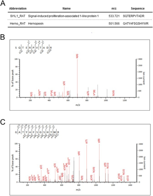 MS/MS analysis of the SIPA1L1 and hemopexin peptides identified. (A) Amino acid sequencing of SIPA1L1 and hemopexin. (B,C) Representative MS/MS spectra of the peptides identified from SIPA1L1 (B) and hemopexin (C).