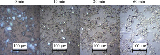 Optical microscope images of PS/PTFE dissolved in GBL and mixed for different time periods. Longer mixing times result in good dispersion of PTFE particles and the formation of bar-like particles.