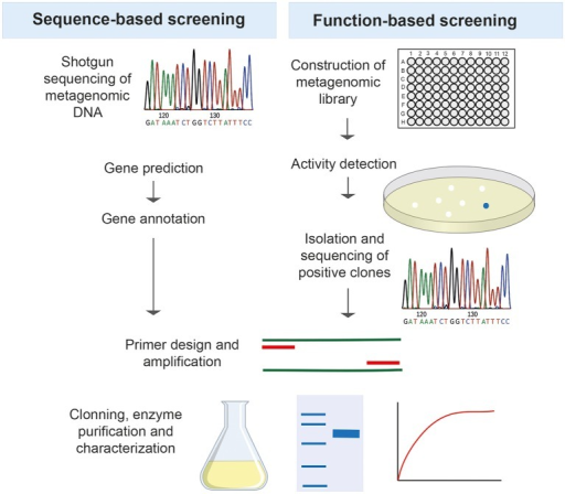 The two major strategies used for screening metagenomes in search of new thermozymes.