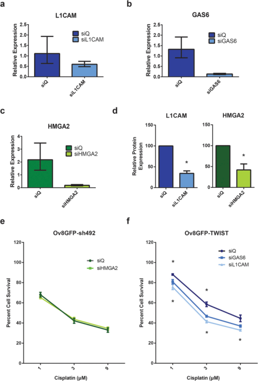 Knockdown of GAS6 or L1CAM reverses drug resistance.(a–c) Validation of siRNAs targeting genes of interest. qRT-PCR confirms knockdown of L1CAM (46%) and GAS6 (90%) in Ov8GFP-TWIST1 cells treated with corresponding siRNAs, and 91% knockdown of HMGA2 in Ov8GFP-sh492 cells treated with HMGA2 siRNAs. (d) Western blot confirms knockdown of L1CAM and HMGA2 at the protein level (normalized results from three independent experiments, p = 0.0276 for HMGA2, p = 0.0042 for L1CAM). (e) SRB assay demonstrates that knockdown of HMGA2 in Ov8GFP-sh492 cells is not sufficient to confer an increased resistance to cisplatin. (f) Knockdown of either GAS6 or L1CAM in Ov8GFP-TWIST1 cells sensitizes this line to cisplatin, compared to treatment with non-targeting siRNA. Upper asterisks, siGAS6 (1 μM, p = 0.0108, 3 μM p = 0.00077, 9 μM p = 0.054); lower, siL1CAM (1 μM, p = 0.00077, 3 μM p < 0.0001, 9 μM p = 0.0064). qPCR error bars represent minimum and maximum values calculated by the StepOne software analysis. SRB error bars represent standard error of the mean.