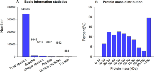 (A) Spectra, peptides and proteins identified from iTRAQ proteomics by searching against the Nematocera database. (B) Molecular weight distribution of the proteins that were identified from the iTRAQ analysis of B. odoriphaga.