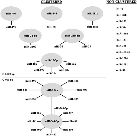 Cluster analysis of miRNAs differentially expressed in response to FMDV infection. Two different databases were employed to assess whether the differentially expressed miRNAs detected in this study were clustered or non-clustered: miRbase (current version) and MetaMirClust. The miRNAs found to be non-clustered were listed to the right. The miRNAs determined to be clustered were shown in circles with clustered miRNA species indicated around the circle. With the exception of bta-miR-369-3p with a cutoff of <3000 bp, the distance cutoff between miRNA sequences for the cluster analysis was set at <10,000 bp