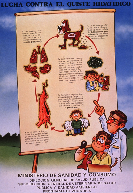 <p>Multicolor poster with black lettering.  Title at top of poster.  Visual image is an illustration of a health worker, a boy, and a dog looking at a giant flip chart.  The chart shows steps in the transmission of a type of tapeworm, Echinococcus, that causes cysts to form in various organs, an infection is known as Echinococcosis or hydatid cysts.  The illustration depicts a dog and its feces containing the tapeworm eggs; a head of lettuce or cabbage, which may harbor the parasite; a boy and a dog; a boy and two sheep; an animal carcass; and infected organs.  Publisher information at bottom of poster.</p>