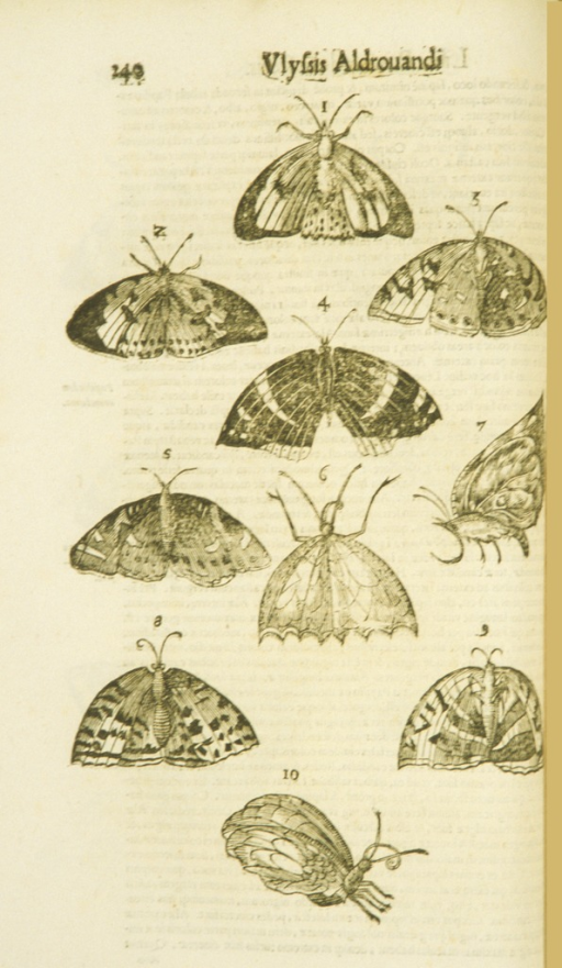 <p>Display of ten moths and butterflies, most with outstretched wings, some in profile.</p>