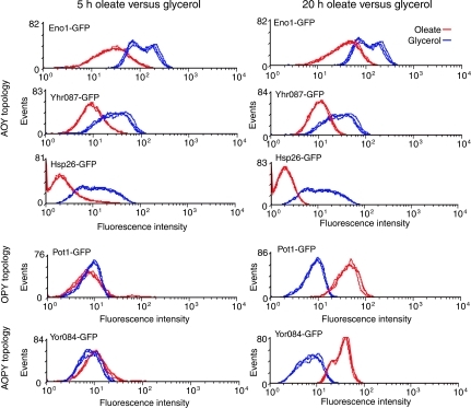 Sequential changes in protein levels reflect coordination of responses by the network. FACS analysis of various GFP-tagged strains corresponding to genes under combinatorial control in the oleate network (topologies listed on the left). For each strain, fluorescence intensities of cells grown in glycerol (blue curves) were compared to those induced in oleate for 5 or 20 h (red curves). Protein levels corresponding to genes of the AOY topology are reduced in the presence of oleate, whereas those corresponding to genes with AOPY and OPY topologies increase after oleate induction. The negative effect of oleate on AOY gene expression is apparent after short and long induction periods, whereas the upregulation of gene targeted by Oaf1p and Pip2p is observed only after long induction periods.