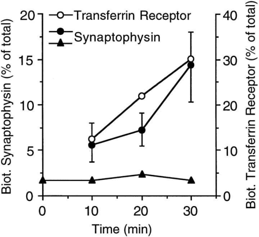 Time course of accumulation of biotinylated  synaptophysin and transferrin receptor at 18°C. PC12  cells were incubated with  (open and closed circles) or  without (closed triangles)  sulfo-NHS-LC–biotin at 18°C  for the indicated times. The  cells incubated without sulfoNHS-LC–biotin at 18°C were  subsequently biotinylated for  30 min at 4°C (closed triangles). Postnuclear supernatants prepared  from the cells were analyzed for biotinylated and nonbiotinylated synaptophysin and transferrin receptor by streptavidin– agarose adsorption, followed by immunoblotting of bound and  unbound material with the respective antibodies. Biotinylated  synaptophysin and transferrin receptor is expressed as percent of  total (sum of biotinylated plus nonbiotinylated synaptophysin  and transferrin receptor, respectively). Data points without error  bars represent single determinations. Data points with error bars  represent the mean of three (transferrin receptor), four (synaptophysin at 10 and 30 min), or two (synaptophysin at 20 min) independent determinations; bars indicate SD or the variation of the  individual values from the mean.