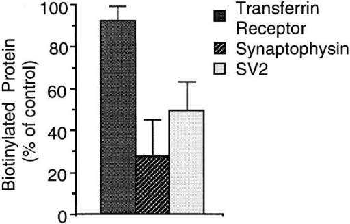 SV2 is accessible to  MesNa after biotinylation at  18°C. PC12 cells were incubated with sulfo-NHS-SS– biotin for 30 min at 18°C,  chased for 5 min at 18°C in  the presence of glycine, and  incubated at 4°C in the absence (control) or presence  of extracellularly added MesNa. Transferrin receptor, synaptophysin, and SV2 in the postnuclear supernatants were analyzed  for binding to streptavidin–agarose by immunoblotting of bound  and unbound material with the respective antibodies. Streptavidin-bound biotinylated transferrin receptor, synaptophysin, and  SV2 present in the postnuclear supernatant were calculated as  percentage of total (sum of streptavidin-bound plus streptavidinunbound transferrin receptor, synaptophysin, and SV2, respectively), and the individual values obtained after MesNa treatment were expressed as percentage of control. Data are the  mean of three independent experiments; bars indicate SD. The  mean values of biotinylated protein for the control condition  were 25.3% (transferrin receptor), 7.5% (synaptophysin), and  3.1% (SV2).