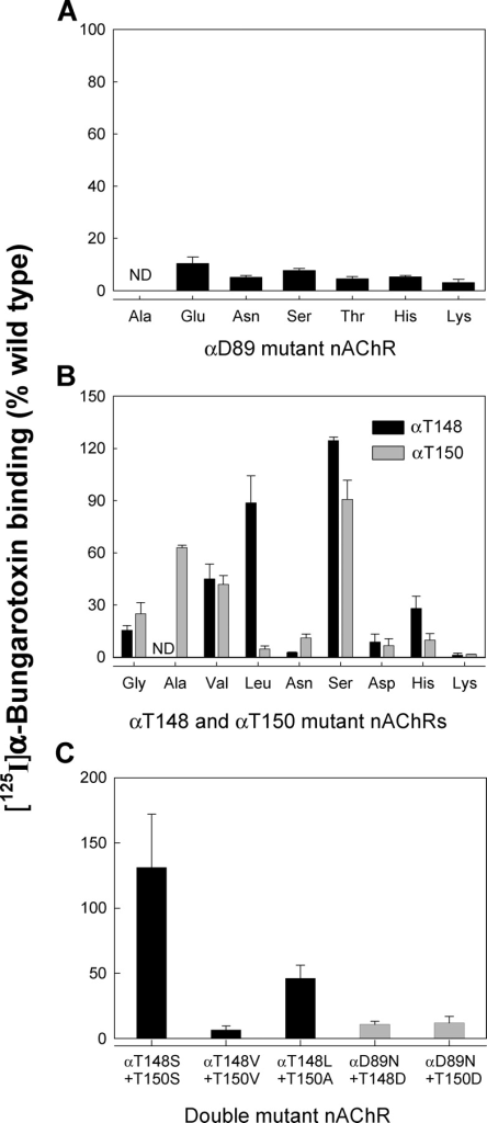 [125I]α-Bungarotoxin binding to wild-type and mutant AChRs expressed in BOSC 23 cells. (A) Cell surface expression of receptors containing mutations at αD89. (B) Cell surface expression of receptors containing mutations at αT148 and αT150. (C) Cell surface expression of receptors containing double mutations. Combination of the optimal single mutations yielded the hydrophobic pair with optimal cell surface expression, αT148L plus αT150A.
