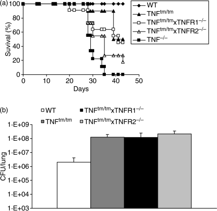 Comparison of resistance to M. tuberculosis infection in TNFtm/tm and TNFR1−/− or TNFR2−/− × TNFtm/tm double transgenic mice. (a) Survival of mice infected by H37Rv i.n. (10–30 CFU per lung, n = 9–11 mice pooled from two independent experiments). (b) Mycobacterial burden in the lung (CFU) 6 weeks after infection. The results are expressed as the mean ± SD (n = 4–6 mice per group of transgenic mice).