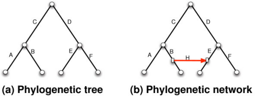 A phylogenetic tree (a) and a phylogenetic network obtained from it by adding a horizontal edge H from edge B to edge E.