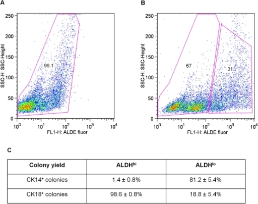 FACS profiles of bovine mammary cells stained for ALDH activity.Cells were stained with ALDEFLUOR with (a) or without (b) diethylamino-benzaldehyde (DEAB), an ALDH inhibitor. Panel c shows the proportional distribution of total clonogenic luminal and myoepithelial progenitors between the Aldehyde Dehydrogenase (ALDH)high and ALDHlow fractions (% of all progenitors of a given type in the fraction shown ± SEM, n = 3).