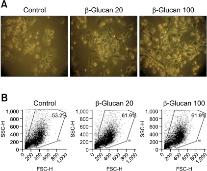Clusters of dendritic cells (DCs) treated with β-glucan. DCs were seeded at a density of 5 × 105 cells/mL in 6-well culture plates, and then treated with β-glucan for 2 days. (A) DC morphology. ×200. (B) The number and size of DCs was measured by flow cytometric analysis.