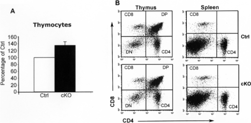 The total number of thymocytes is increased in cKO mice.Total number of thymocytes in tamoxifen-treated F/F;Cre (cKO, n = 6) and littermate F/F controls (Ctrl, n = 6). The number of cells in cKO mice is shown as percent of cells in controls. Data are presented as mean ± SEM. P<0.05. (B) Flow cytometric analysis of thymocyte populations (thymus) and T cell subsets (spleen) in cKO and control (Ctrl) mice. Single cells are displayed on a dot plot of CD4 versus CD8. CD8: (CD8+ single positive); CD4: (CD4+ single positive); DP: (CD4+/CD8+ double positive); DN: (CD4−/CD8− double negative). Experiments were performed three times.