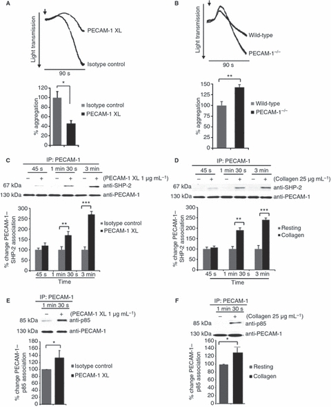 Stimulation of platelet endothelial cell adhesion molecule-1 (PECAM-1) signaling results in recruitment of phosphatidylinositol 3-kinase (PI3K). Washed human platelets were incubated with antibody specific for PECAM-1 crosslinking (XL) or isotype control prior to stimulation with collagen-related peptide (0.5 μg mL−1) for 90 s (A), or wild-type and PECAM-1-deficient mouse platelets were stimulated with collagen (2.5 μg mL−1) (B) and aggregation was measured under constant stirring conditions at 37 °C. Washed human platelets were treated with EGTA (1 mm), apyrase (2 U mL−1) and indomethacin (10 μm) prior to stimulation of PECAM-1 by antibody crosslinking (C, E) or with collagen (D, F) for 45, 90 and 180 s. (C, D) Levels of Src homology 2 domain-containing protein tyrosine phosphatase-2 (SHP-2) associated with PECAM-1 were detected before equivalent protein loading was verified by reprobing for PECAM-1. Levels of p85 subunit of PI3K associated with PECAM-1 detected after stimulation with glycoprotein VI agonist collagen (25 μg mL−1) (E) or antibody specific for PECAM-1 crosslinking (1 μg mL−1) (F). Equivalent protein loading was verified by reprobing for PECAM-1. Immunoblots were visualized by fluorescence imaging, quantified, and normalized for protein loading. Numerical data represent the percentage change of PECAM-1–SHP-2 association in stimulated samples as compared with control (mean ± standard error of the mean; n = 4). t-test: *P ≤ 0.05, **P ≤ 0.01, ***P ≤ 0.001. IP, immunoprecipitation.